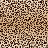 Seamless animal leopard pattern, vector