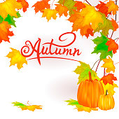 http://www.istockphoto.com/vector/seamless-autumn-background-red-and-yellow-pumpkins-and-autumn-leaves-gm960496434-262285397