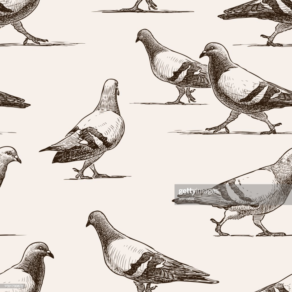 Seamless background of walking city pigeons