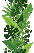 Seamless Border of Monstera, Banana, Ficus and Palm Leaves