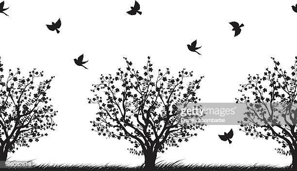 ilustraciones, imágenes clip art, dibujos animados e iconos de stock de patrón sin costuras de árboles de cerezo - cherry tree