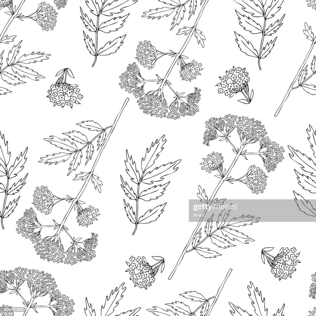 Seamless floral pattern, Valeriana officinalis hand drawn vector illustration isolated on white background, line art for design package cosmetic, organic medicine, greeting card, herbal green tea