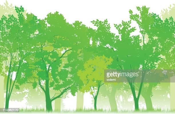 Nahtlose Forest