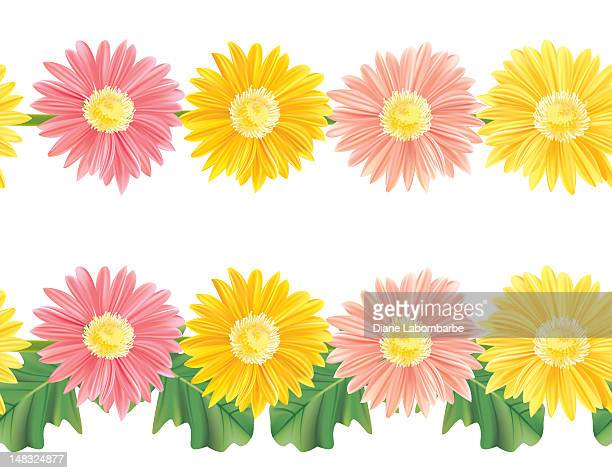 seamless gerbera daisy borders - gerbera daisy stock illustrations, clip art, cartoons, & icons