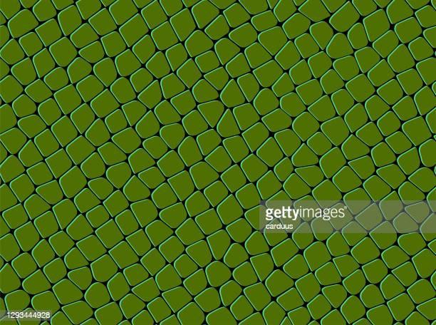 seamless  green   squama   pattern - animal scale stock illustrations