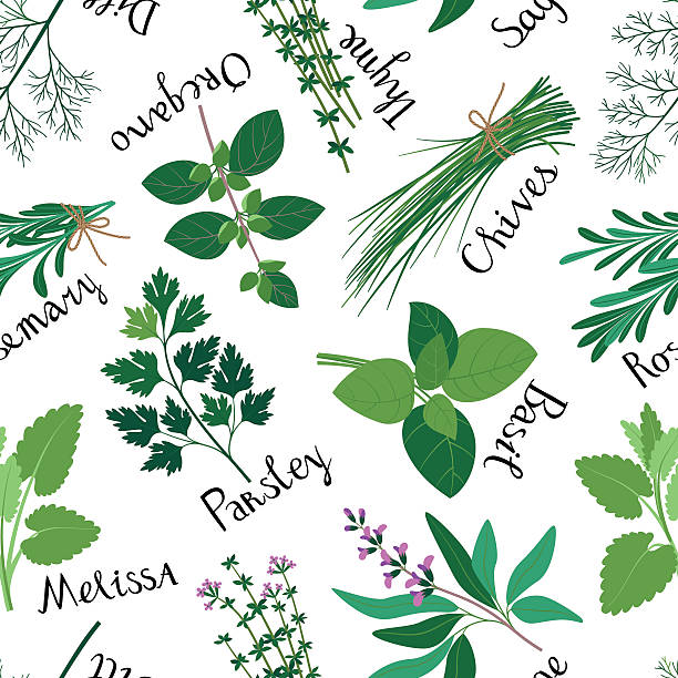 Seamless Pattern Fresh Herbs. Wall Art