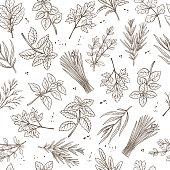 Seamless pattern herbs