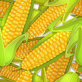 Seamless pattern of corncobs
