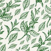 Seamless pattern of tea. Vector