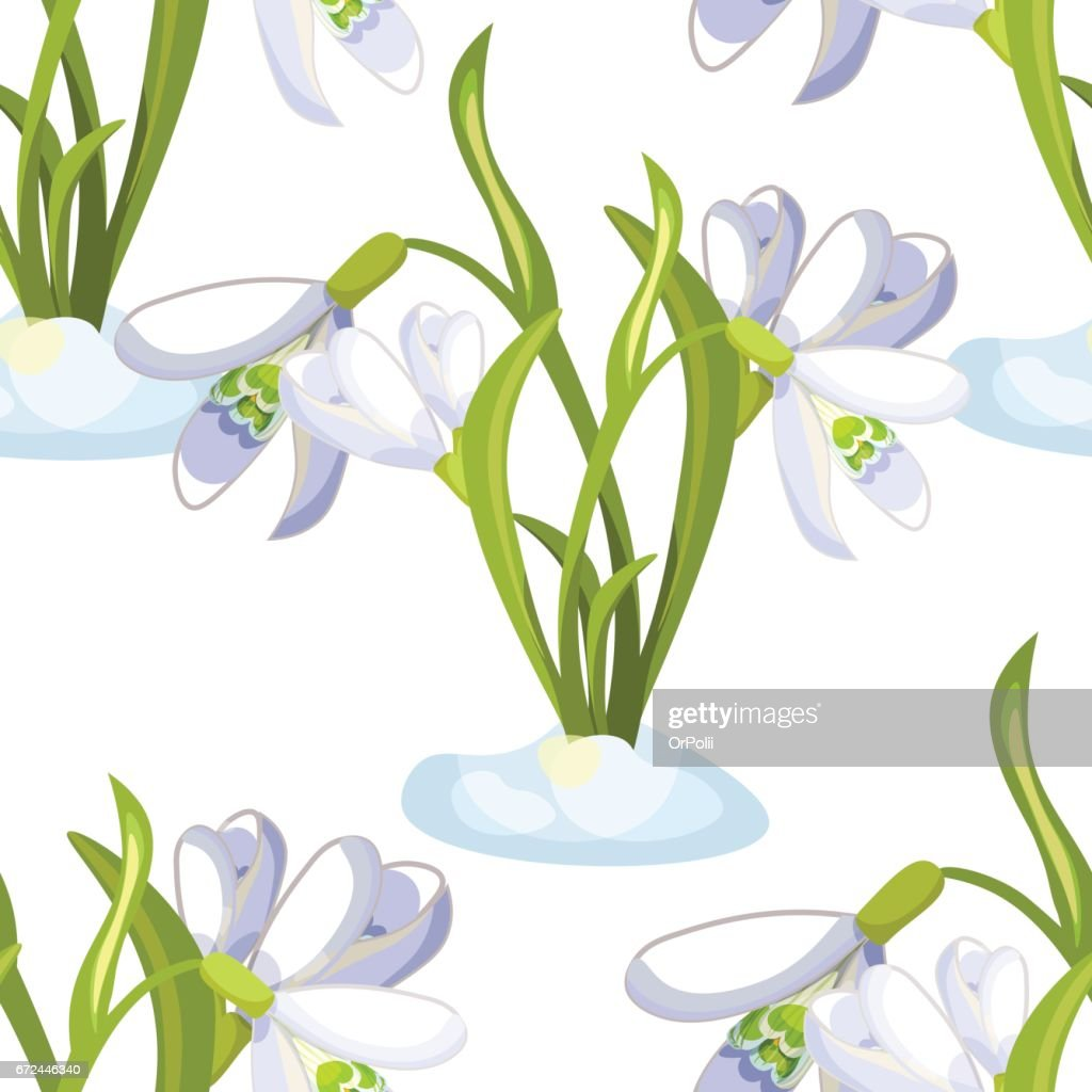 Seamless pattern snowdrop flower blossomed with leaves. Vector illustration