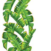 Seamless pattern with banana palm leaves. Decorative tropical foliage