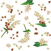 Seamless pattern with buckwheat branches, flowers and grains