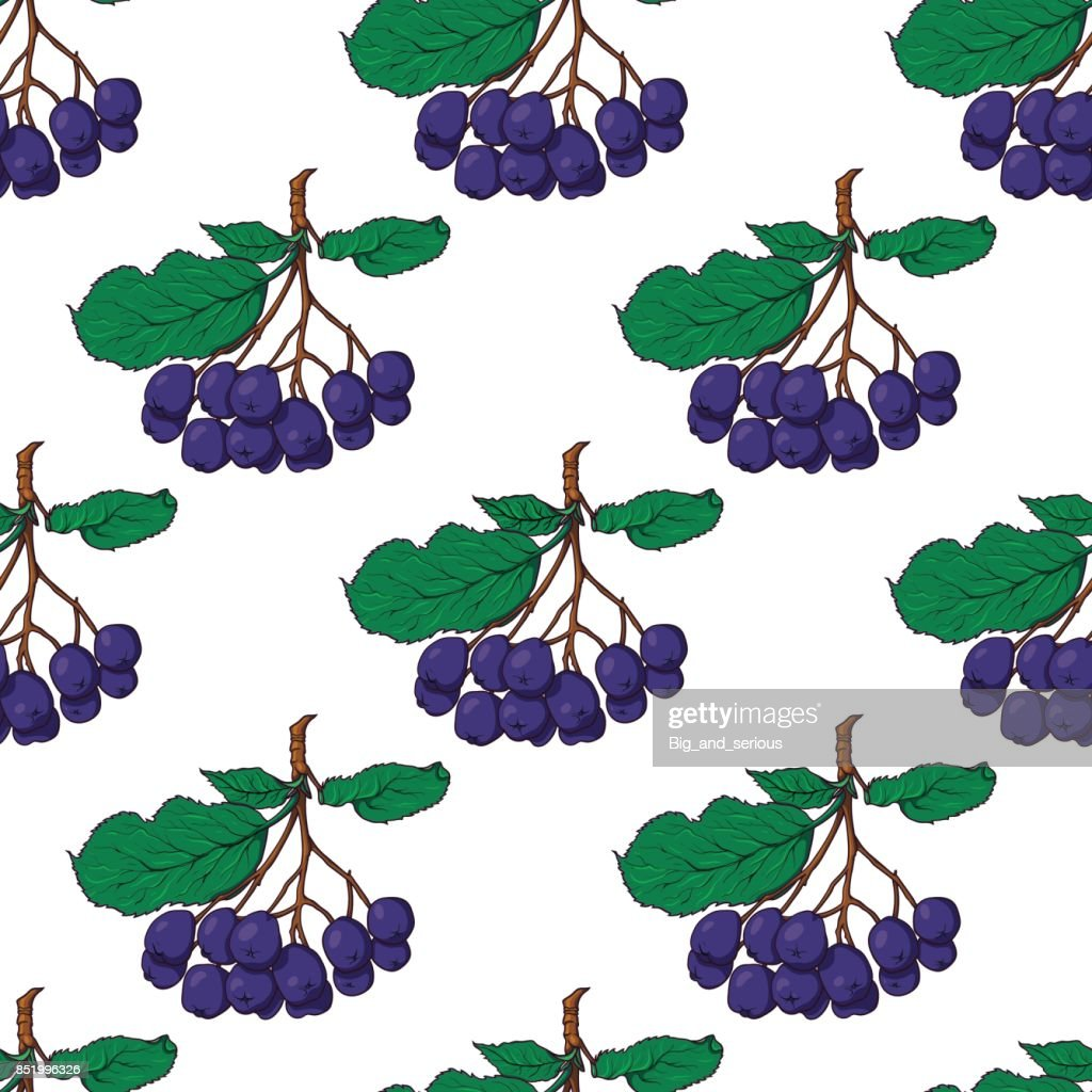 Seamless pattern with bunches of chokeberry