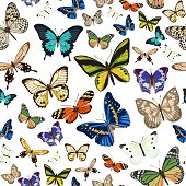 Seamless pattern with different types of multicolored butterflies. Vector illustration.
