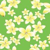 Seamless pattern with frangipani flowers