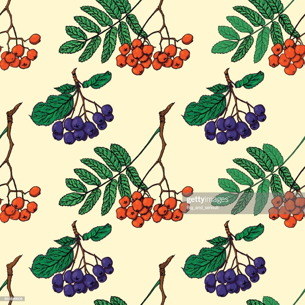 Seamless pattern with red and black rowan berries