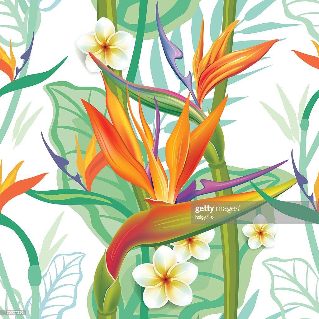 Seamless pattern with Strelitzia