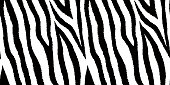 Seamless pattern with zebra fur print. Animal leather wallpaper. Vector illustration.