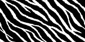 Seamless pattern with zebra print. Vector illustration. Animal fur texture.