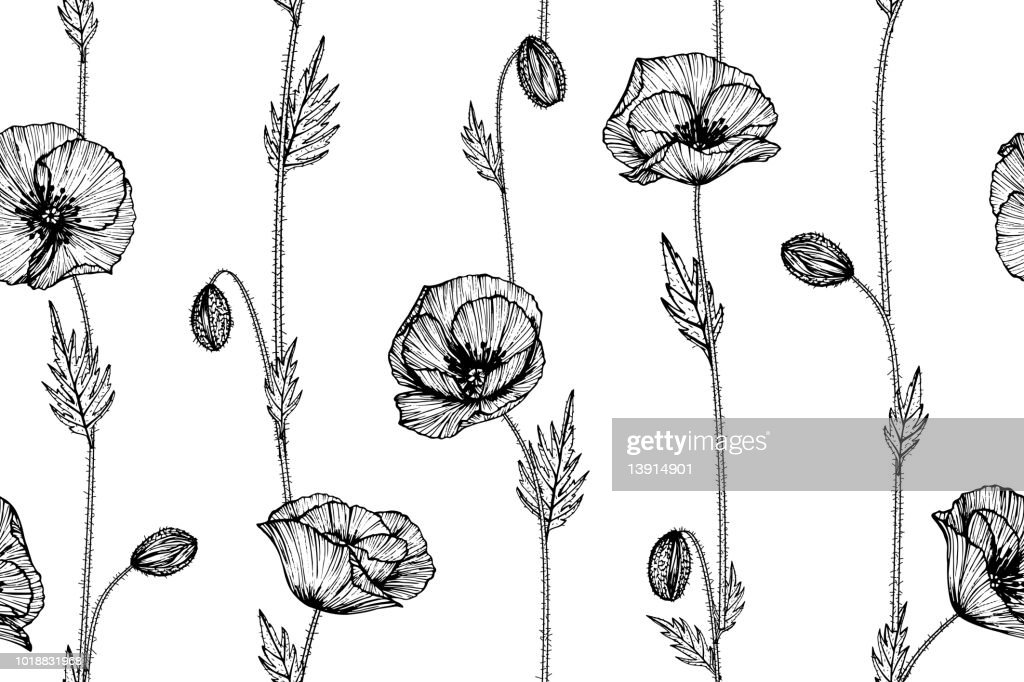 Seamless Poppy flower pattern background. Black and white with drawing line art illustration.