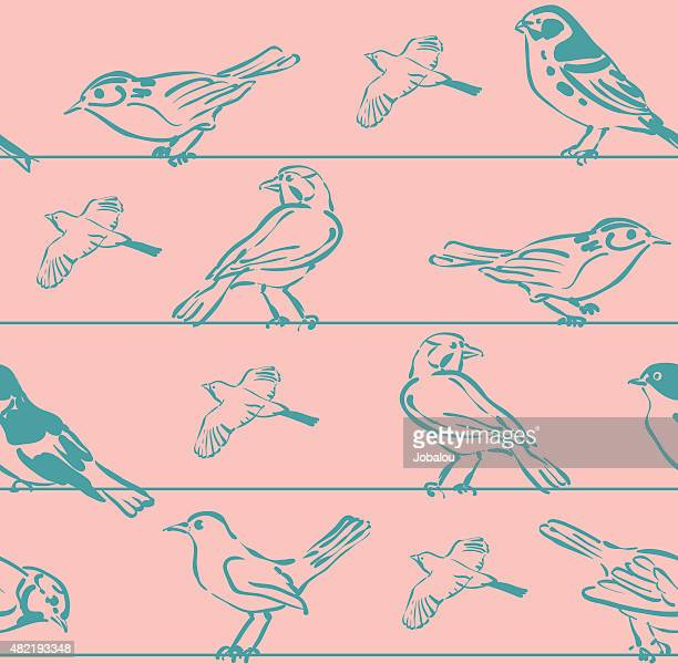 seamless set bird sketchs - telephone line stock illustrations, clip art, cartoons, & icons