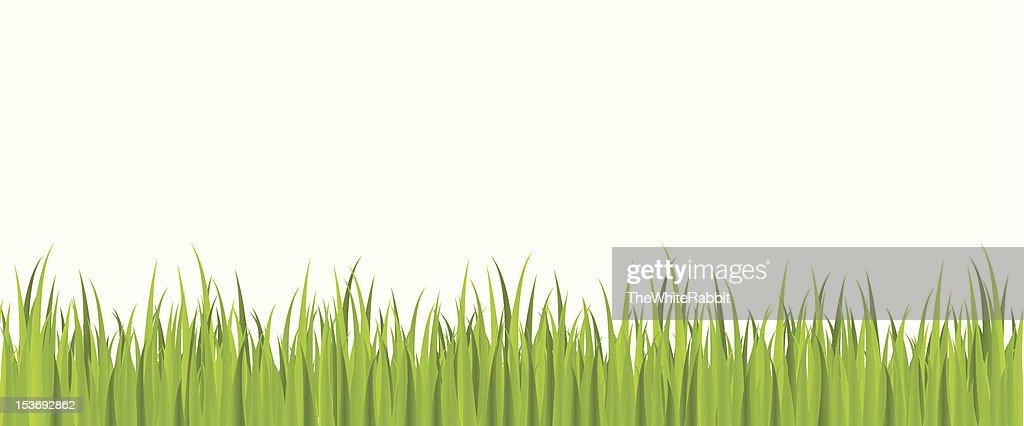 Seamless spring grass