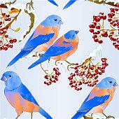 Seamless texture Bluebirds birds  thrush small songbirdon on on snowy tree and berry winter background vintage vector illustration editable