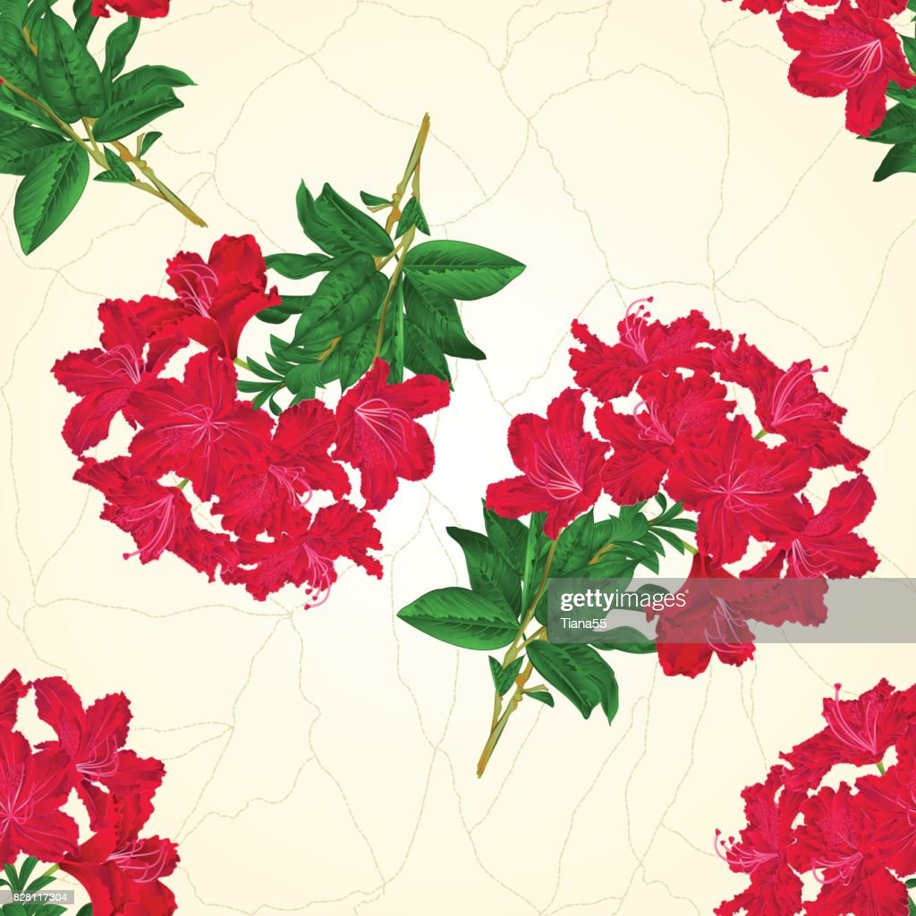 Seamless texture branch red flowers rhododendron  vintage   vector botanical  background illustration