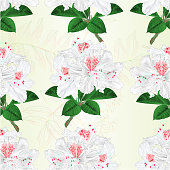 Seamless texture flowers white rhododendrons twig mountain shrub vintage vector illustration editable