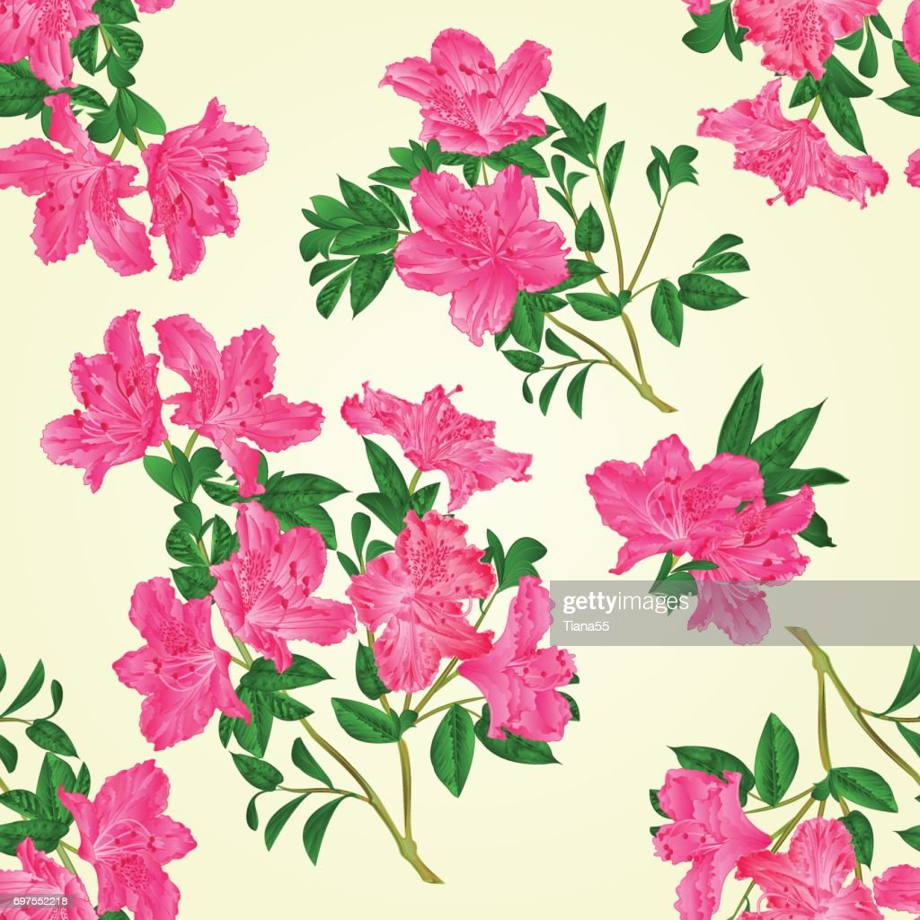 Seamless texture pink rhododendron twig with flowers and leaves mountain shrub vintage vector