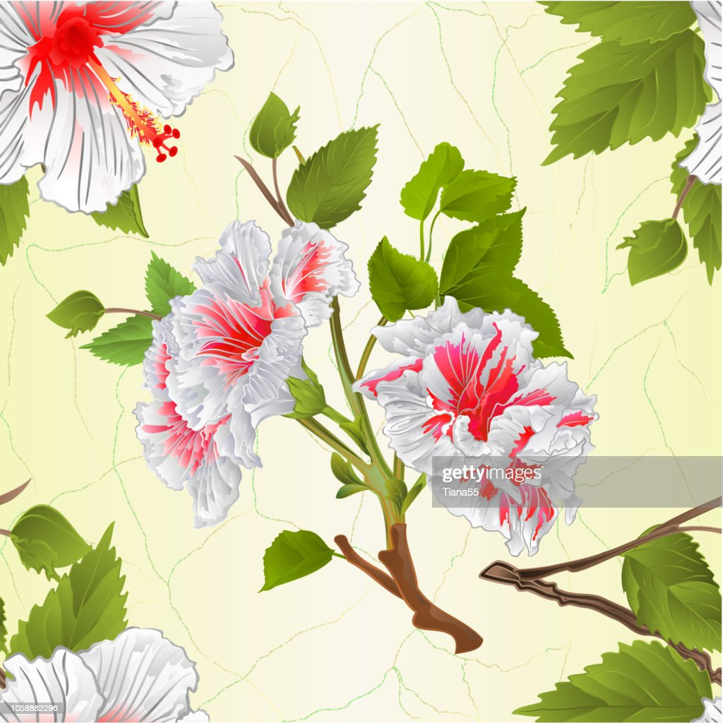 Seamless texture stems white hibiscus tropical flowers natural background vintage vector illustration editable