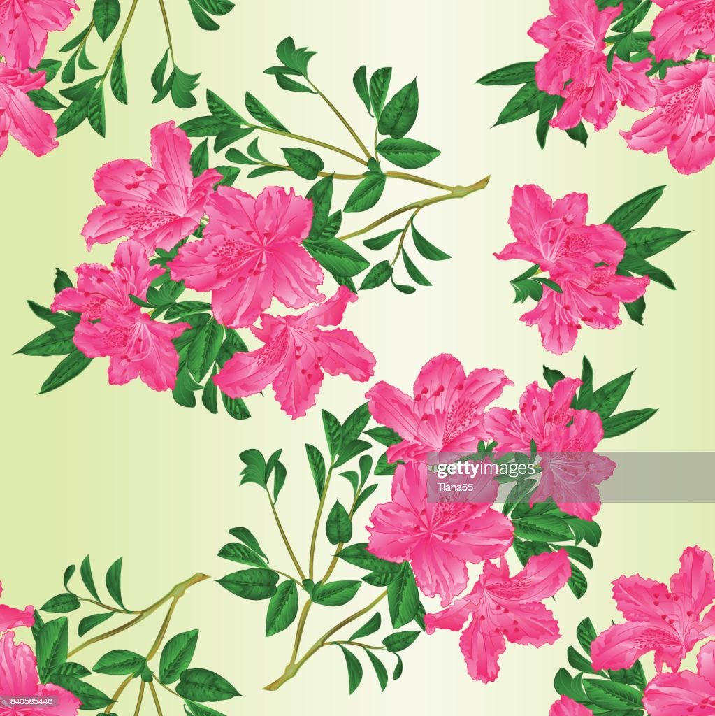 Seamless texture twig pink rhododendron  with flowers and leaves   vintage vector editable botanical illustration