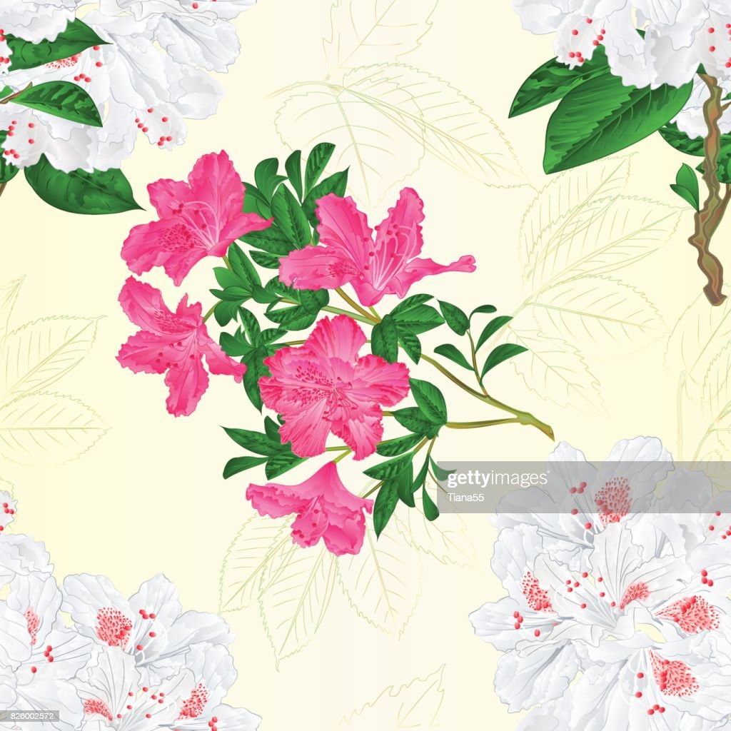 Seamless texture twig white and pink flower rhododendron  vintage vector editable illustration