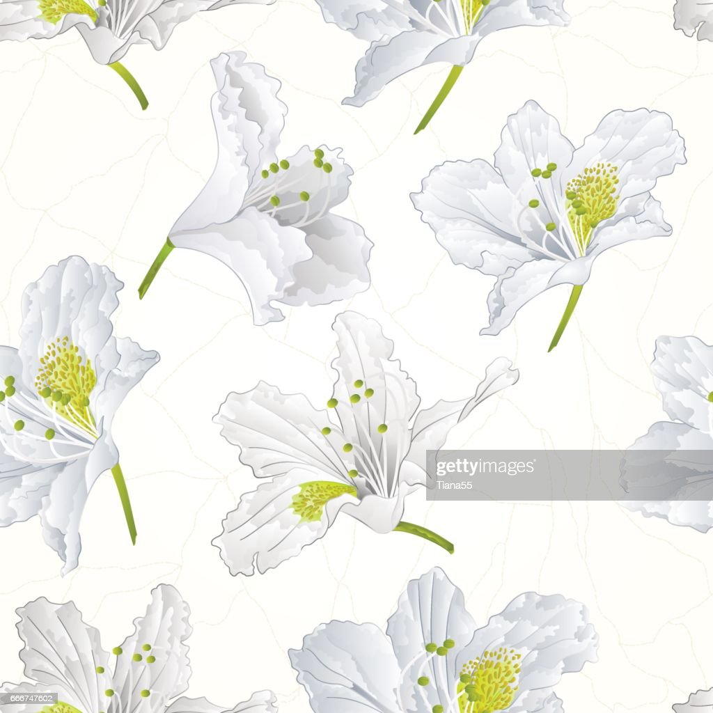 Seamless texture white rhododendron cracks vintage vector