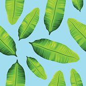 Seamless tropical banana leaves pattern on blue background