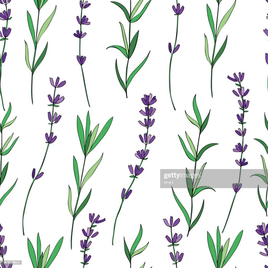 Seamless vector floral pattern, hand drawn graphic Lavender flower, decorative texture, sketch isolated on background, for wallpaper, textile, fabric, design packaging, scrapbooking, wedding card