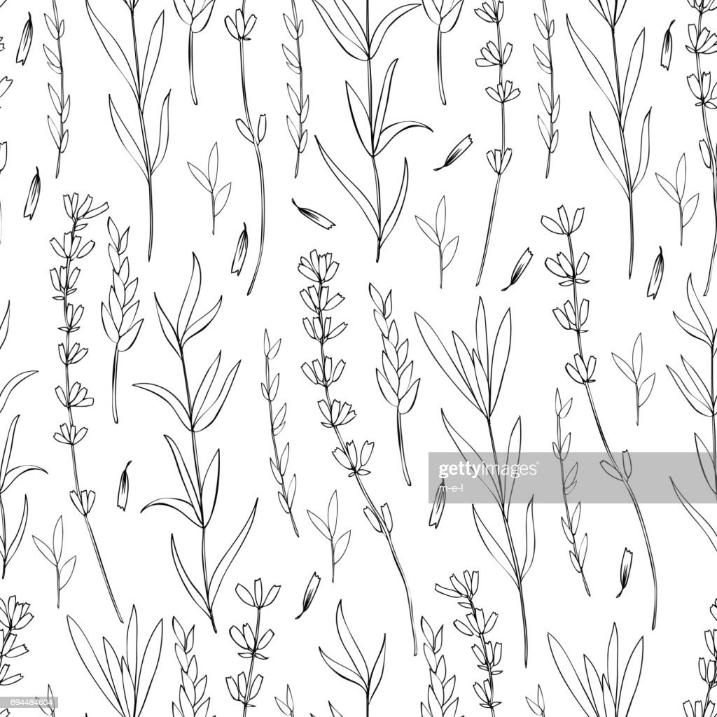 Seamless vector floral pattern, hand drawn Lavender flower, decorative texture, sketch isolated on white background, design for wallpaper, textile, fabric, greeting card, wedding invite, cosmetic