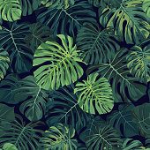 Seamless vector tropical pattern with green monstera palm leaves on dark background. Exotic hawaiian fabric design