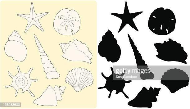 ilustraciones, imágenes clip art, dibujos animados e iconos de stock de dibujo concha de mar - concha de mar