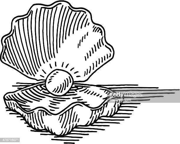 ilustraciones, imágenes clip art, dibujos animados e iconos de stock de dibujo concha de mar pearl - concha de mar