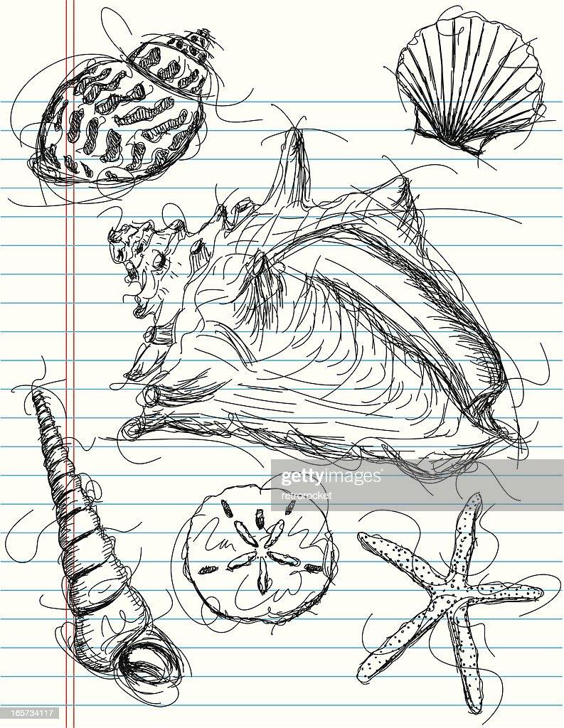 seashell sketches