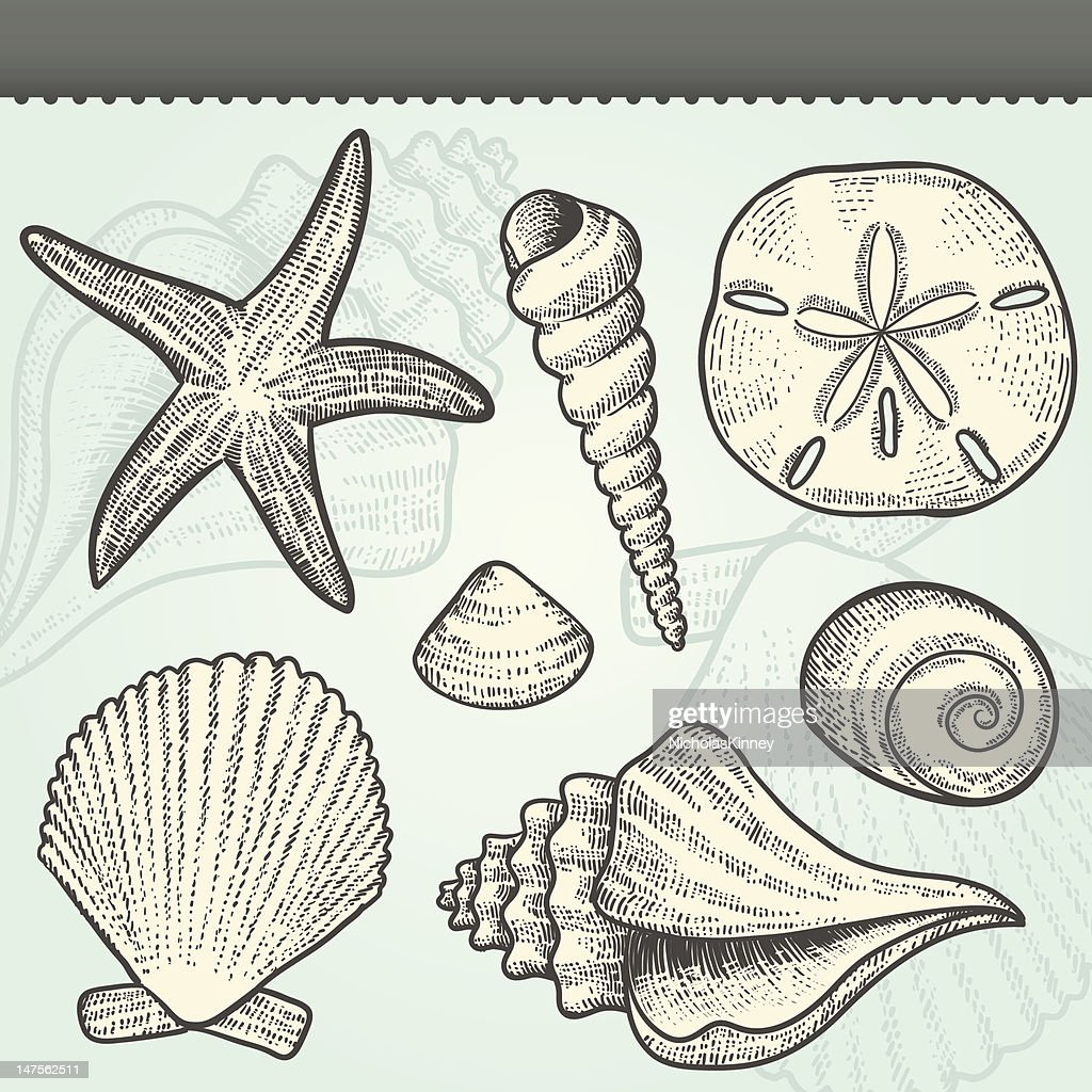 Seashells Craft Vintage Vector Elements Set