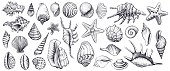 Seashells vector set. Hand drawn illustrations.