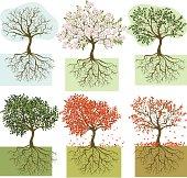 Seasonal trees
