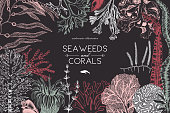 Seaweeeds design template