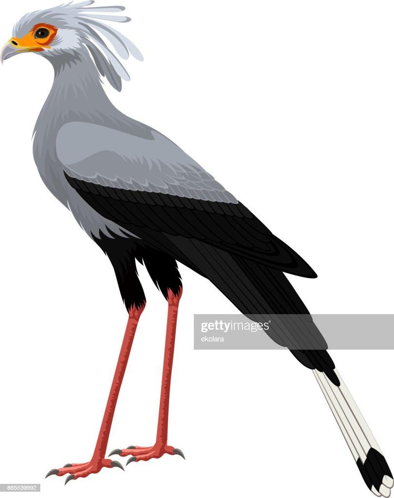 Secretary bird (Sagittarius serpentarius) vector illustration