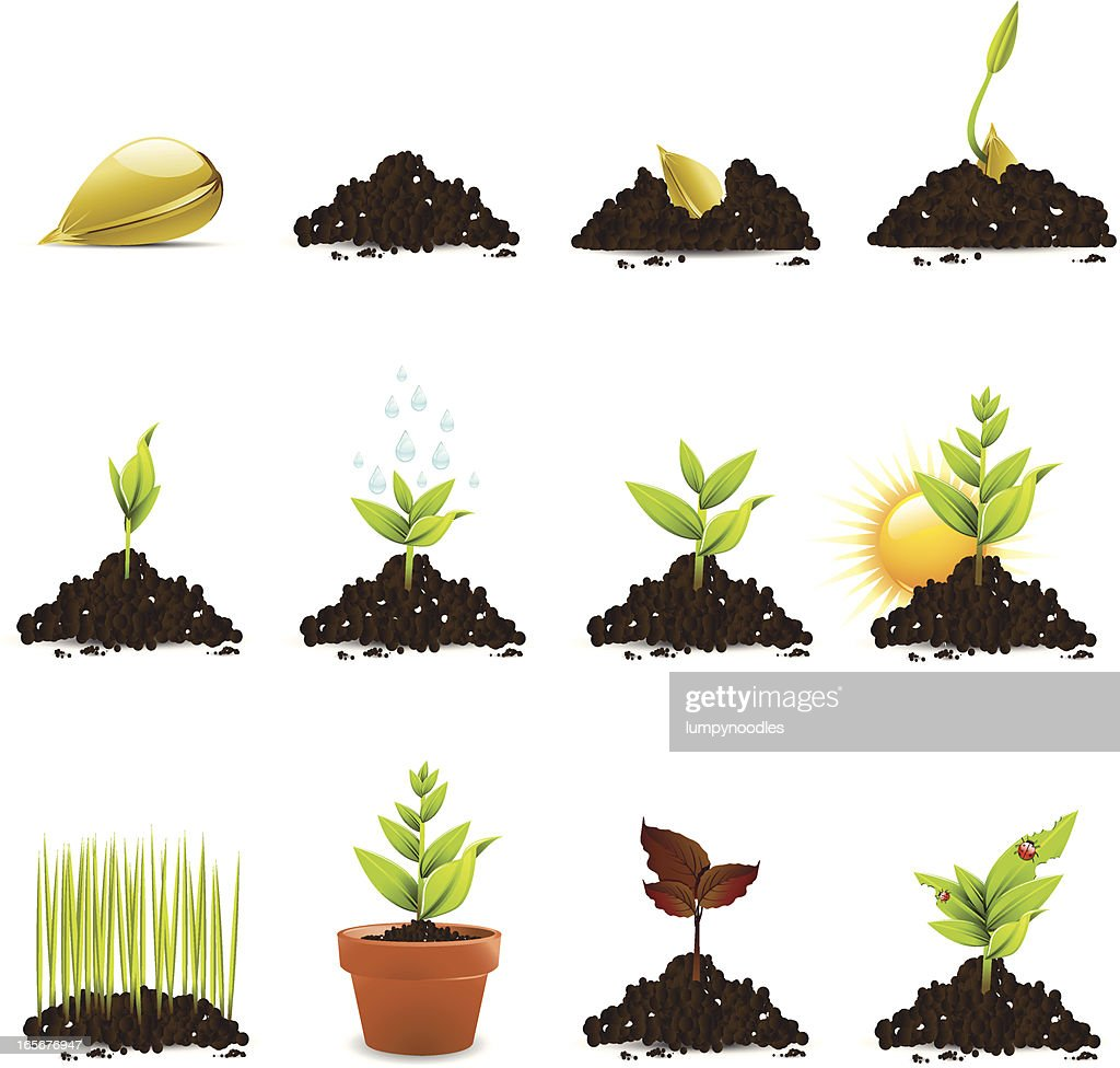 Collection of pistachio, sunflower and pumpkin seeds Clip Art | k39062447 |  Fotosearch