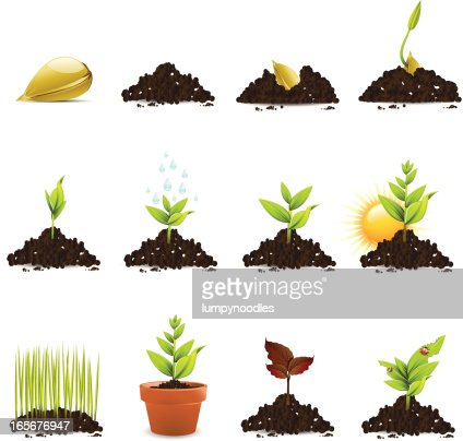 Seed And Plant Growth Icons Vector Art | Getty Images