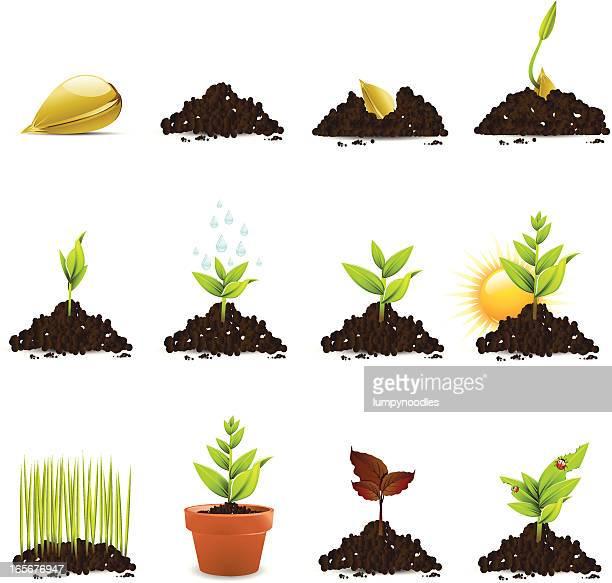 シードと植物の成長のアイコン