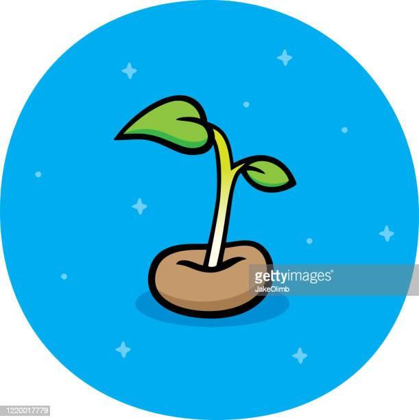 ilustrações, clipart, desenhos animados e ícones de doodle de brotação de sementes - produto local